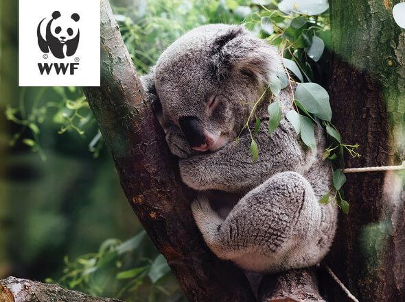 環境保護活動の一環として「コアラの里親プログラム」をWWFと共に推進